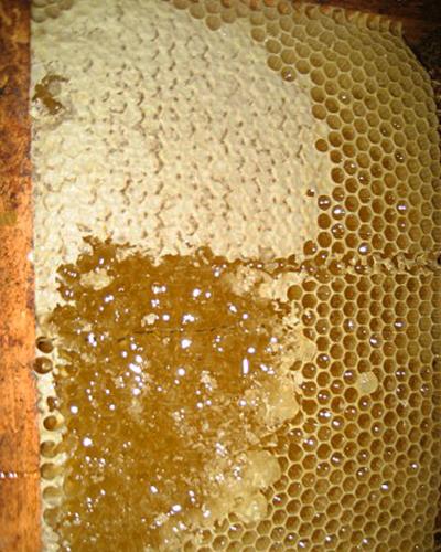 panal de miel azahar
